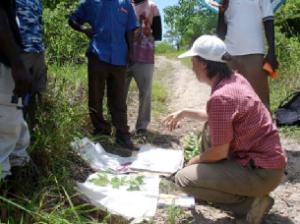Ausbildung: Pflanzen sammeln und Anlegen eines Herbars zur Dokumentation der Arten